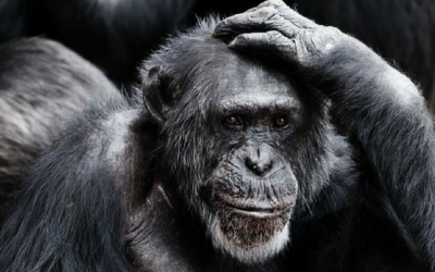 The Gift of Full Presence: Ignore Your Monkey Mind
